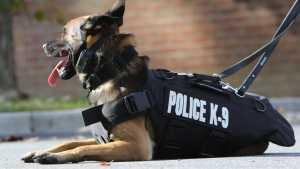 kenapa anjing pelacak disebut k-9