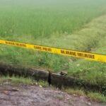 TKP Ditemukan Mayat Korban Pembunuhan Di Tulangan Sidoarjo